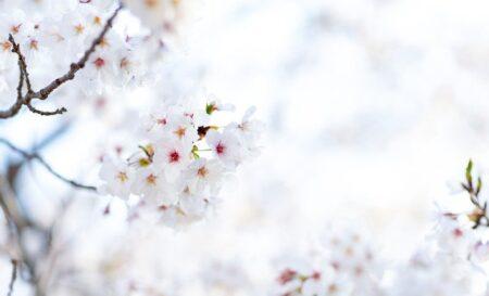 新入社員の春!【HB通信vol.005】