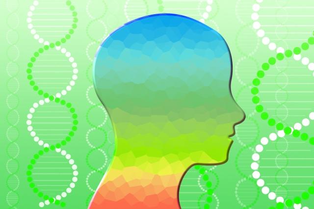 記憶力UPのために知っておきたい脳の4つの機能 【淡蒼球/側坐核】